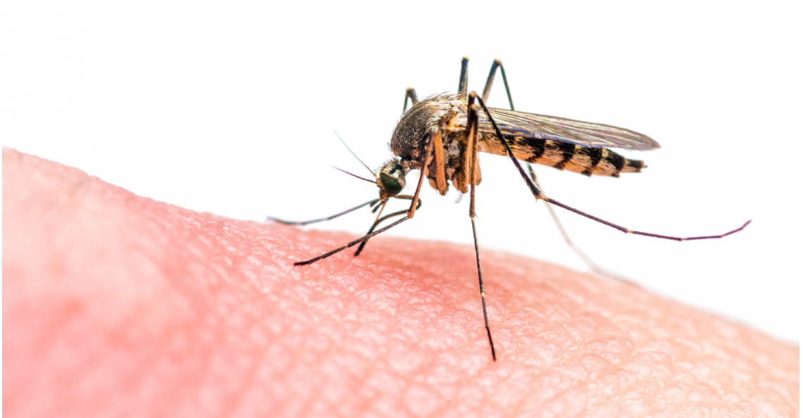 Australië wil drones gebruiken om muggen te bestrijden
