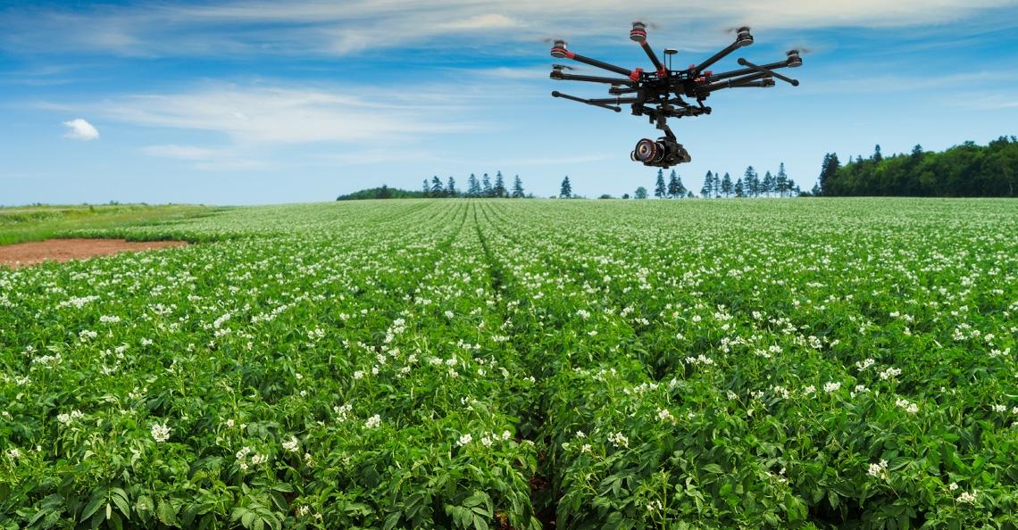 Drones traceren virus in pootaardappelen