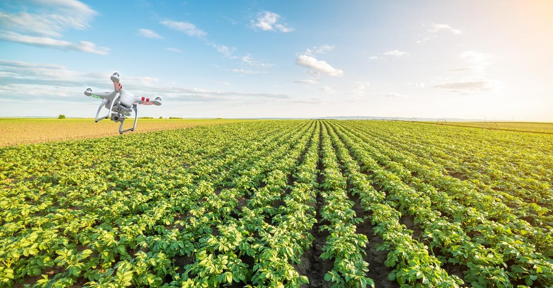 Onderzoekers werken aan drone die automatisch aardappelen telt