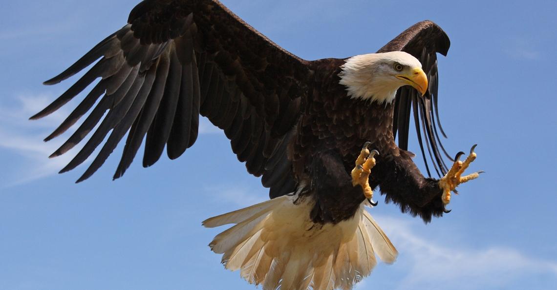 Frankrijk zet ook roofvogels in tegen ongewenste drones