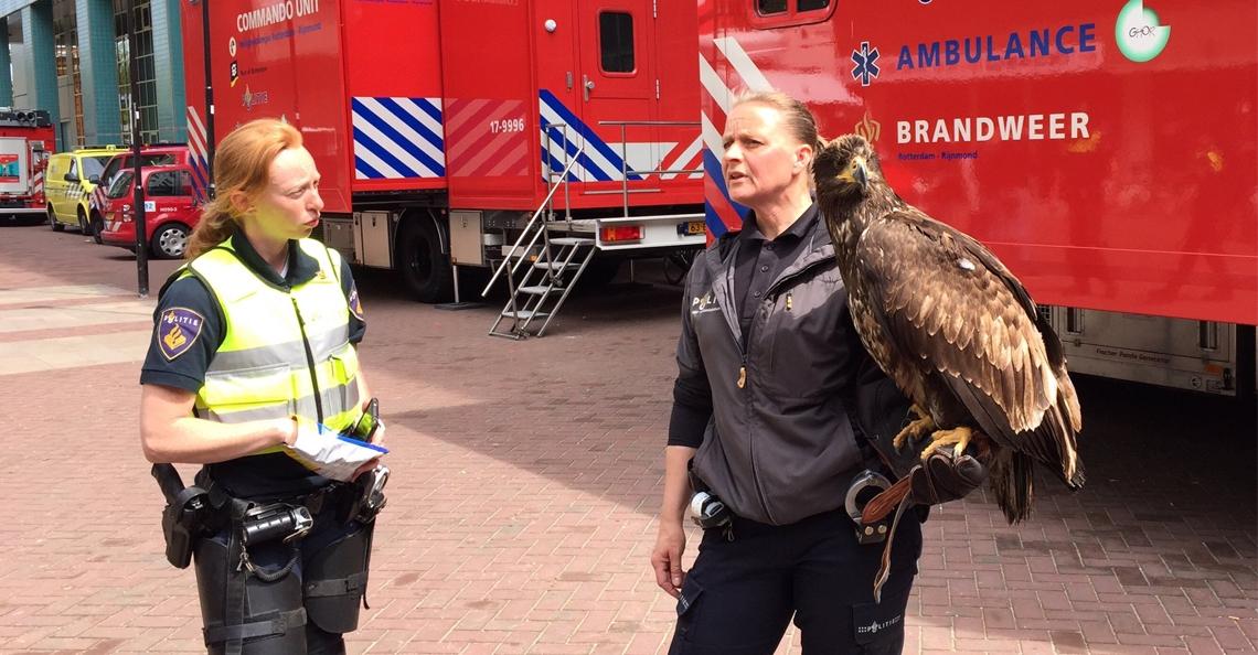 Zeearend beschermt voetbalsupporters Feyenoord tegen drones