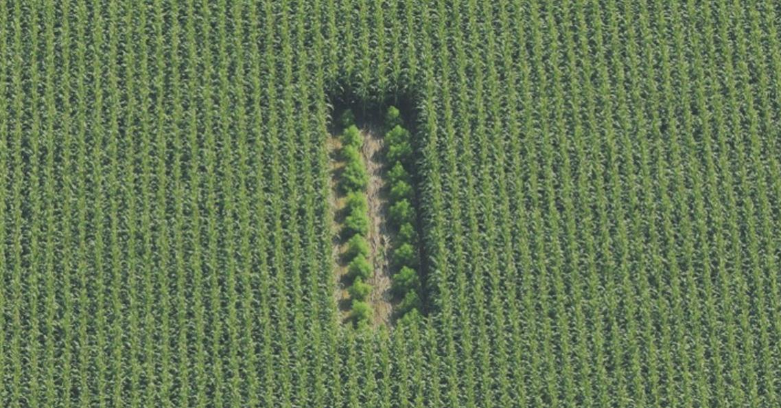 Limburgse boeren gebruiken drone voor opsporing illegale wietplantages