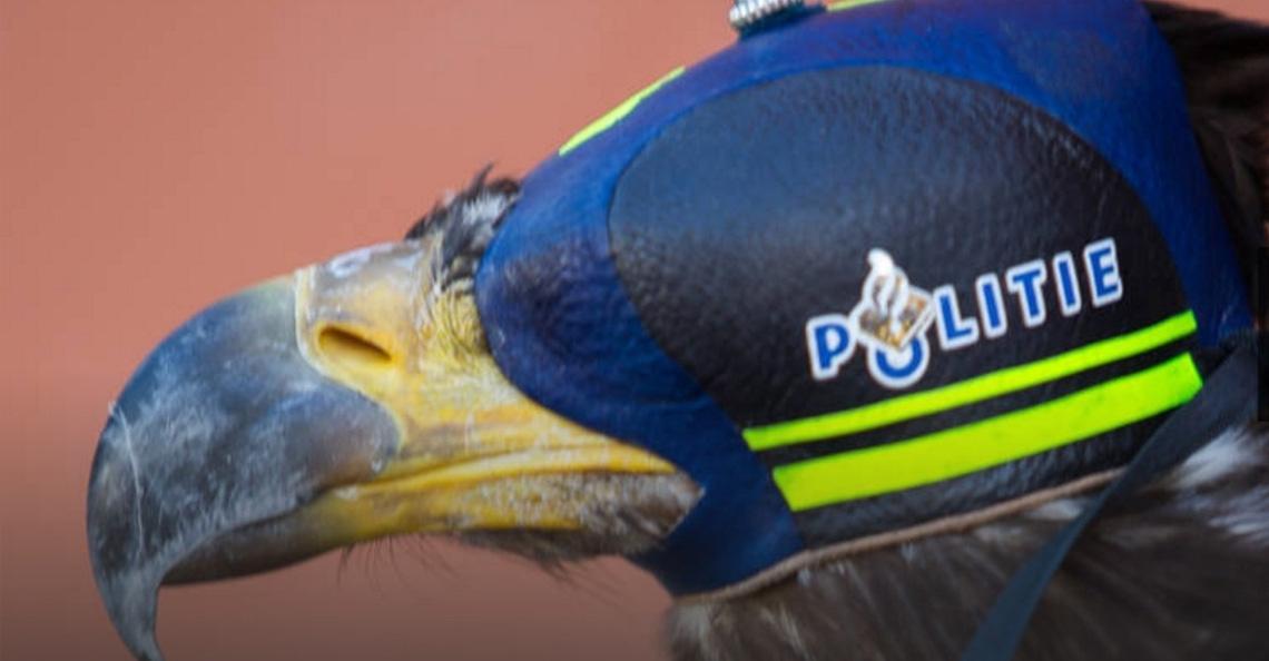 Nederlandse roofvogel beschermt NAVO-top tegen drones