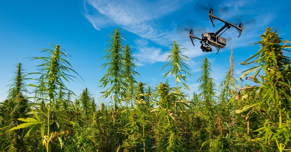 Drones zoeken wiet in Limburgse gewassen