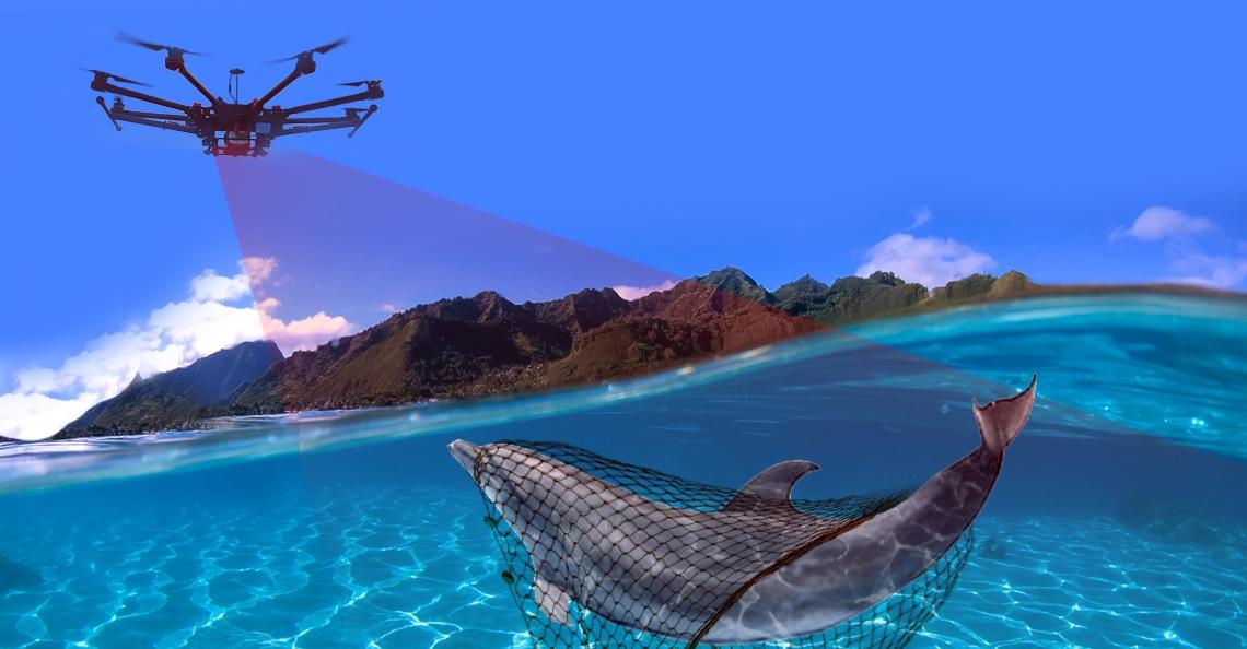 Drones uitgerust met warmtebeeld camera's redden dolfijnen in Nieuw-Zeeland
