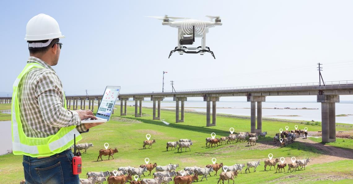 Drones monitoren gezondheid van Amerikaans vee