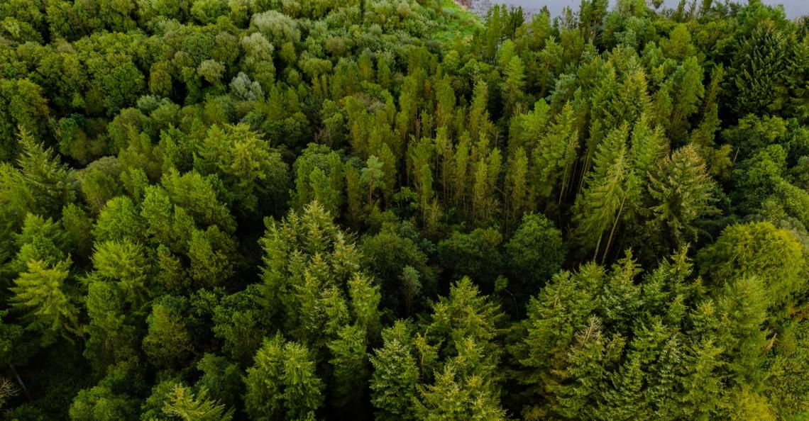 Flash Forest wil 1 miljard bomen planten met drones