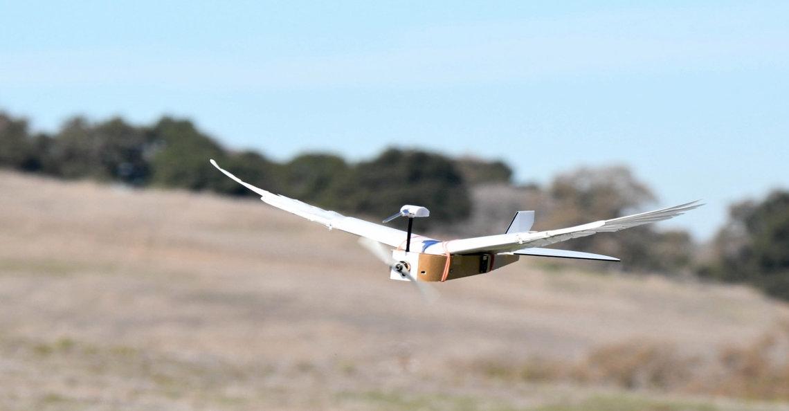 Onderzoekers ontwikkelen vogel-achtige drone die vleugels kan buigen