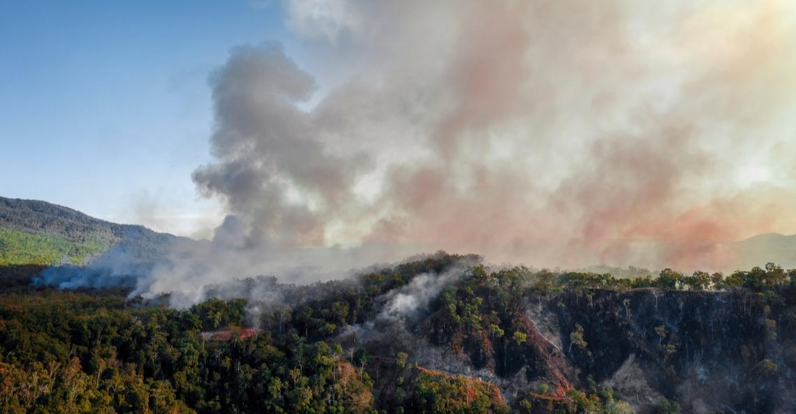 Drones op zoek naar gewonde dieren na verwoestende bosbranden