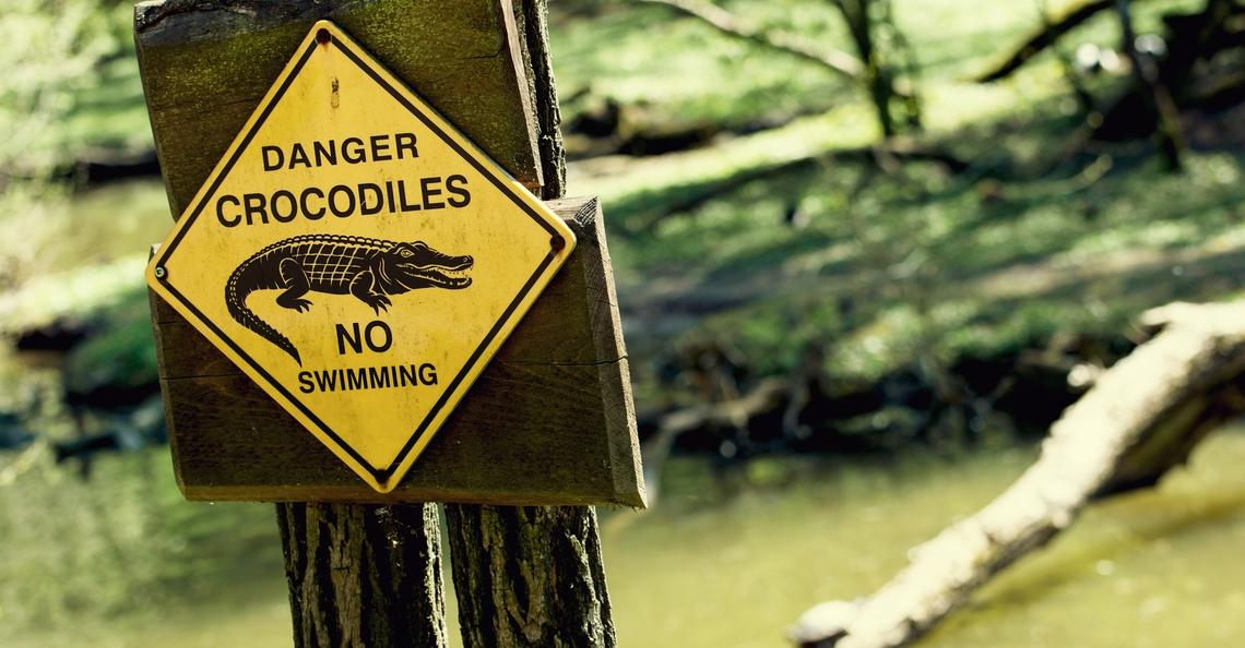 Drones ingezet om krokodillen te lokken en te vangen
