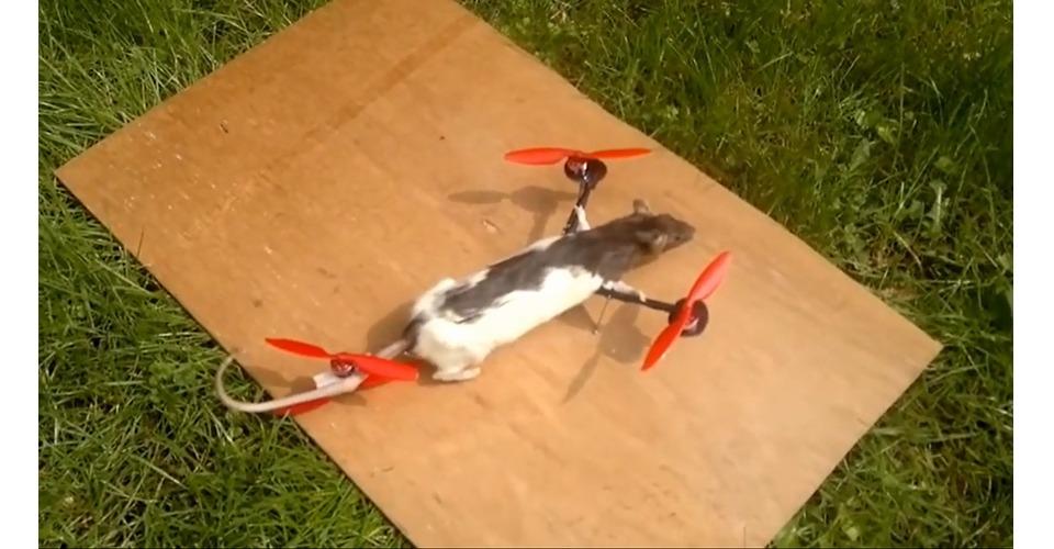 Catcopter bij Carlo & Irene: Life 4 You
