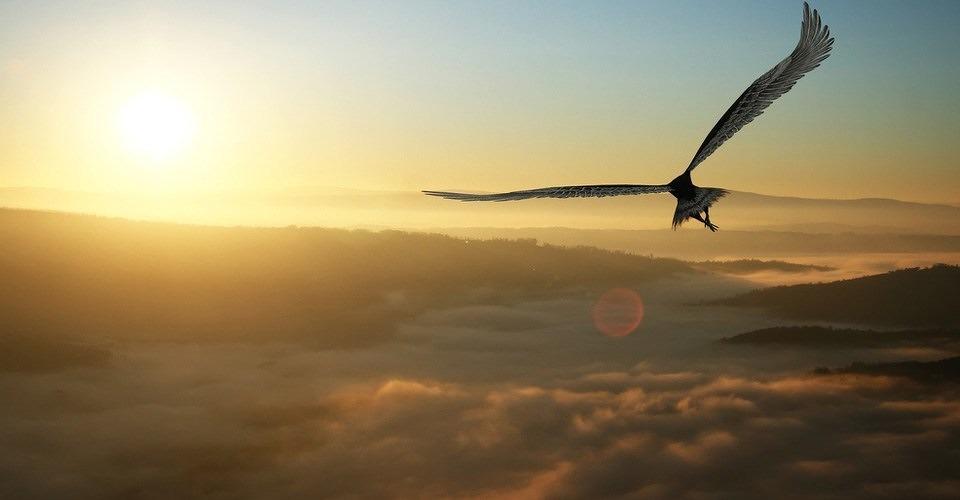 DARPA wil drones bouwen met eigenschappen roofvogels