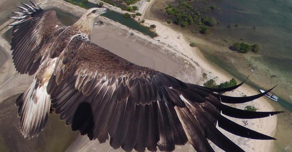 De 10 beste drone foto's