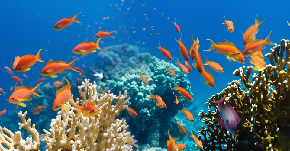 Drone brengt koraalrif Caribische Zee in kaart