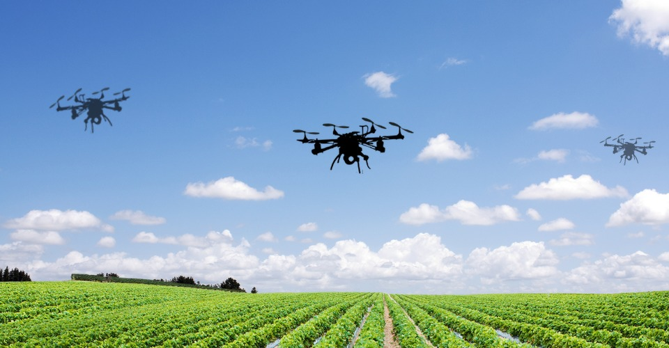 Fruitveilingen Sint-Truiden willen liever geen drones